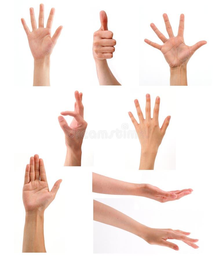 Uppsättning av händer i vit bakgrund royaltyfria foton