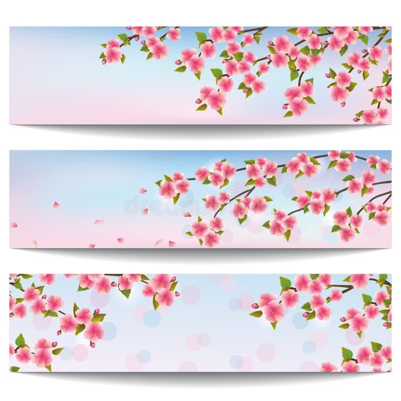 Uppsättning av härliga baner med det rosa sakura körsbärsröda trädet vektor illustrationer