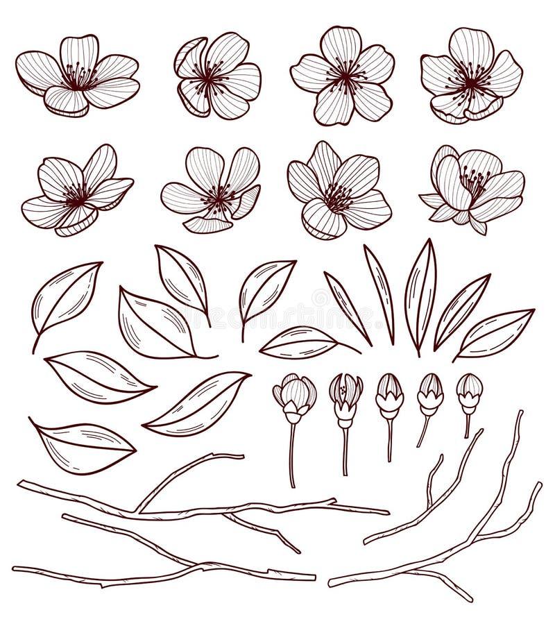 Uppsättning av härliga blommor för körsbärsrött träd som isoleras på witebakgrund Samling av den hand drog sakura eller äppleblom stock illustrationer