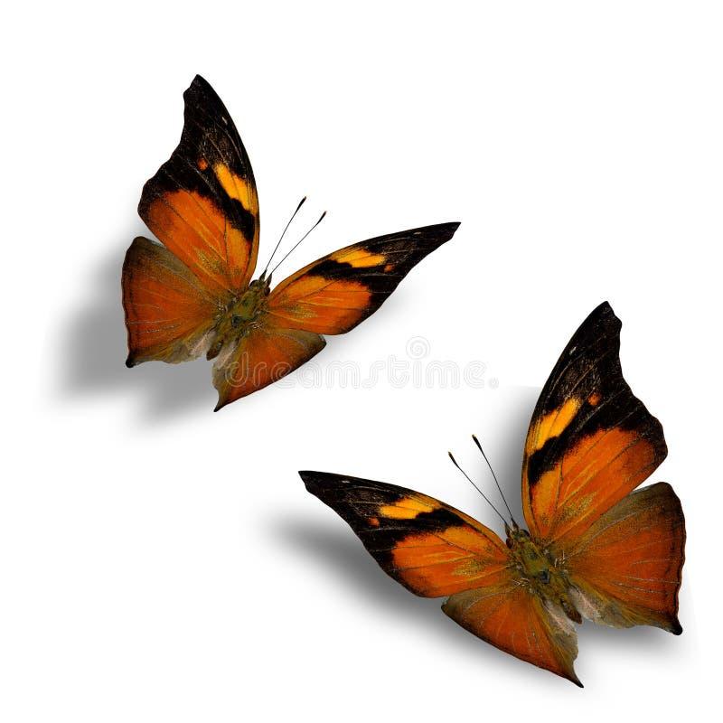 Uppsättning av härliga fjärilar för flyga Autumn Leaf med mjuk skugga royaltyfri foto