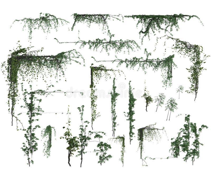 Uppsättning av hörn för vinranka 3d royaltyfri illustrationer