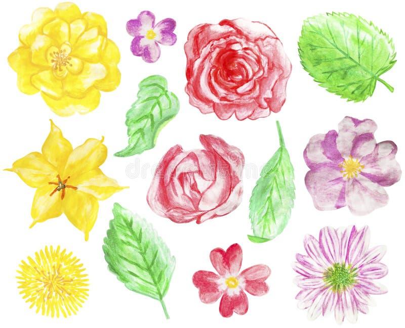 Uppsättning av hand drog vattenfärgblommor och sidor royaltyfri illustrationer