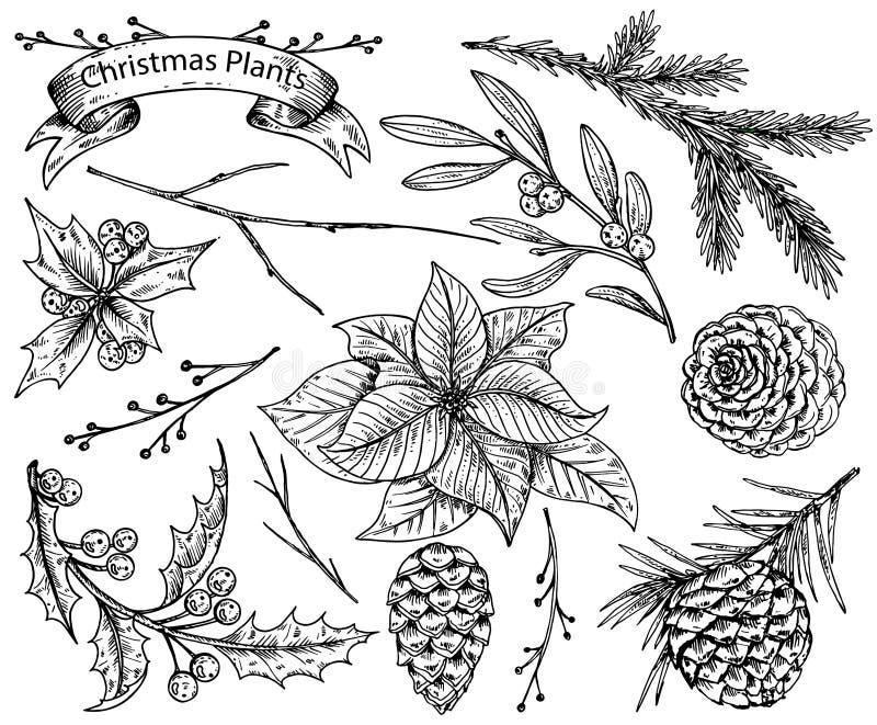 Uppsättning av hand drog vinterväxter stock illustrationer