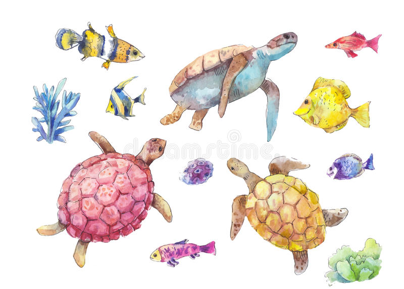 Uppsättning av havssköldpaddor, den marin- fisken och algvattenfärgen vektor illustrationer