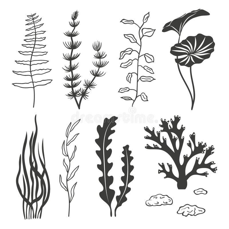 Uppsättning av havsväxter, koraller och stenar som isoleras på vit bakgrund royaltyfri illustrationer