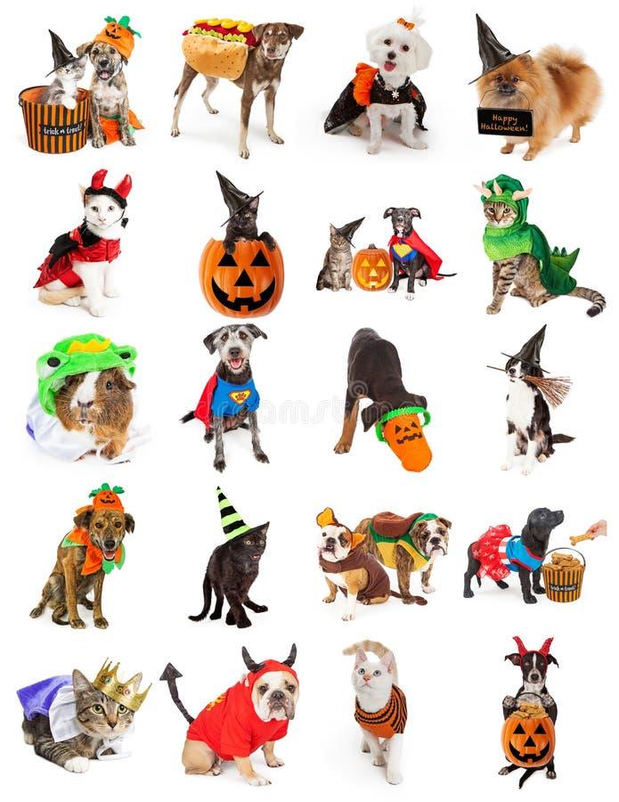 Uppsättning av husdjur i allhelgonaaftondräkter arkivfoto