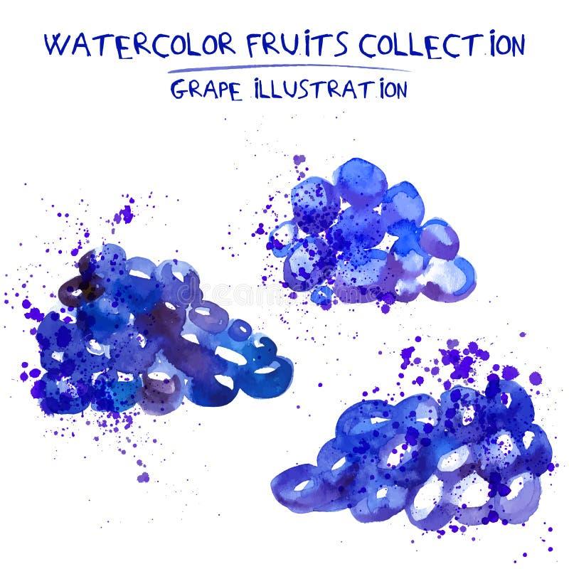 Uppsättning av illustrationen för vattenfärgdruvavektor Plaskad hand vektor illustrationer
