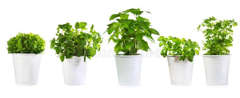 Uppsättning av inlagda gröna växter arkivbilder