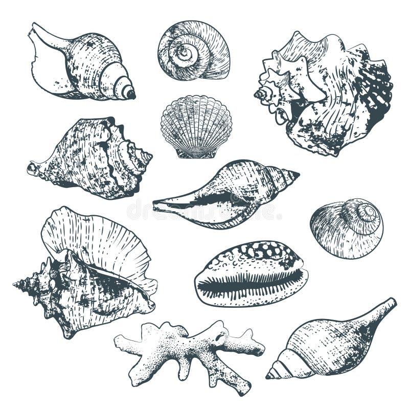 Uppsättning av isolerad hand dragen havsskal och korall Skissa stilöversiktsskal vektor illustrationer