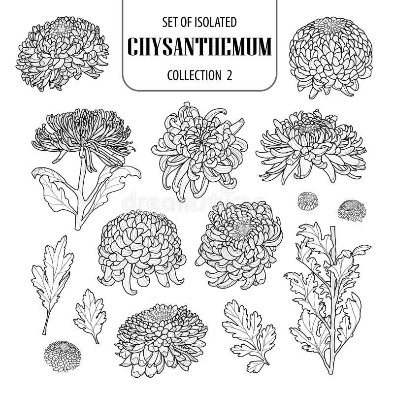 Uppsättning av isolerad krysantemumsamling 2 Gullig blommaillustration i hand dragen stil Svart vit nivå för översikt och på vit  royaltyfri illustrationer