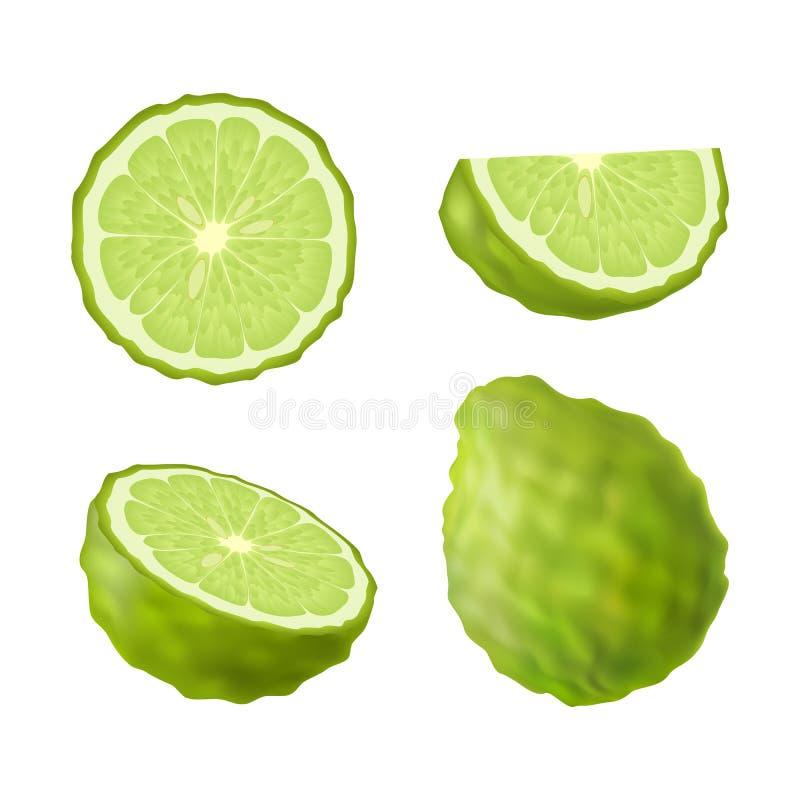 Uppsättning av isolerad kulör grön bergamot, kaffirlimefrukt, halva, skiva, cirkel och hel saftig frukt på vit bakgrund Realistis vektor illustrationer