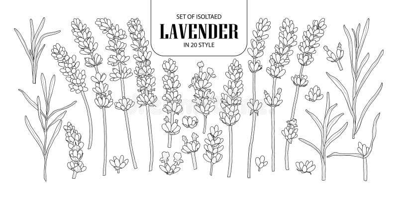 Uppsättning av isolerad lavendel i 20 stilar Gullig hand dragen blomma ve royaltyfri illustrationer