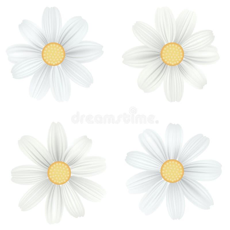 Uppsättning av isolerad vit kamomill, tusensköna Vektorn blommar på vit bakgrund Mallen för för t-skjorta, mode, skrivar ut vektor illustrationer