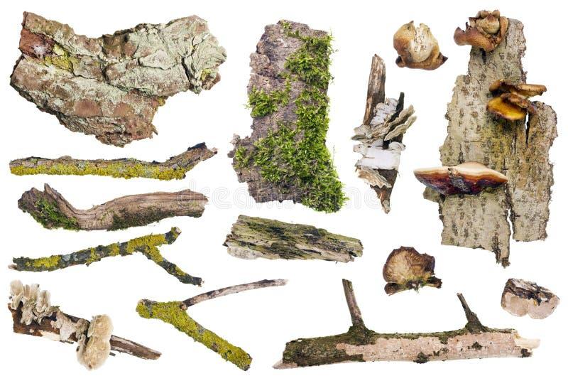 Uppsättning av isolerade skogbeståndsdelar arkivfoton