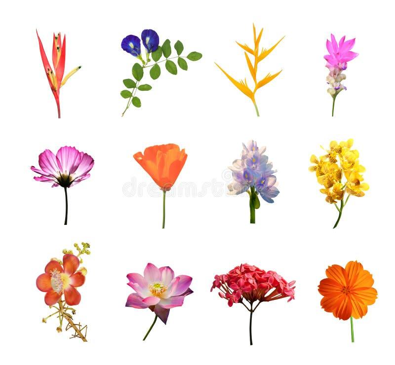 Uppsättning av isolerade blommor royaltyfria bilder