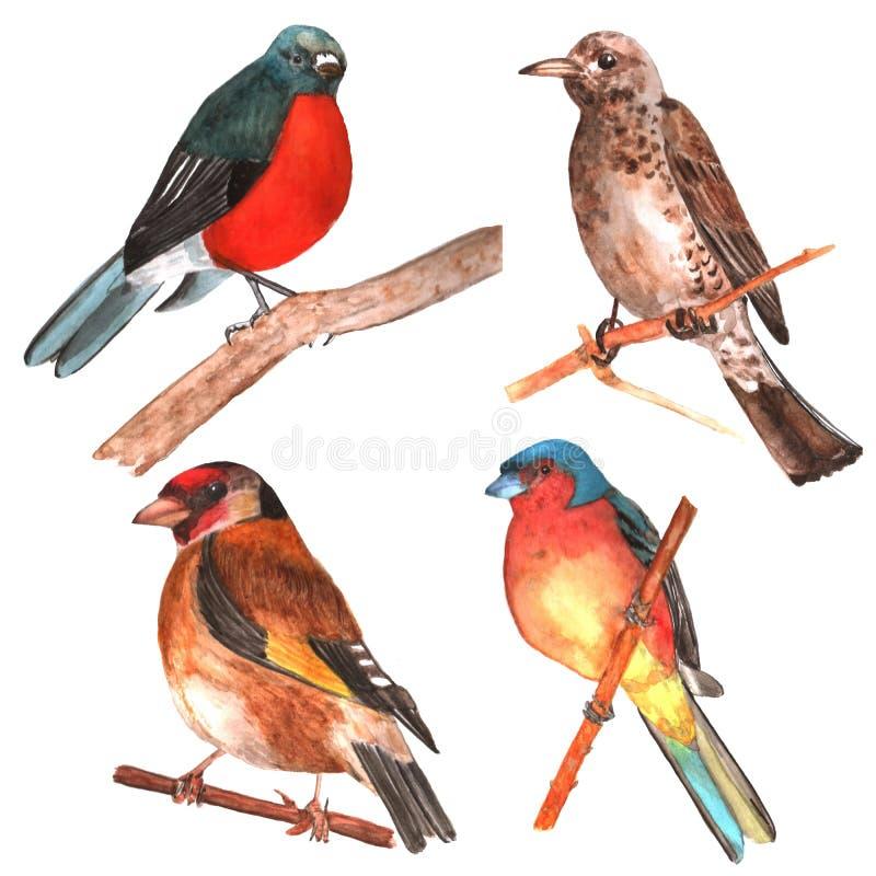 Uppsättning av isolerade fåglar vattenfärg stock illustrationer