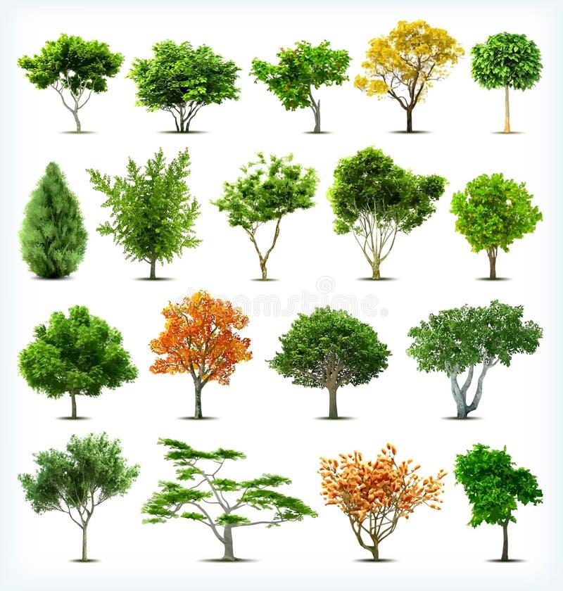 Uppsättning av isolerade träd. Vektor vektor illustrationer