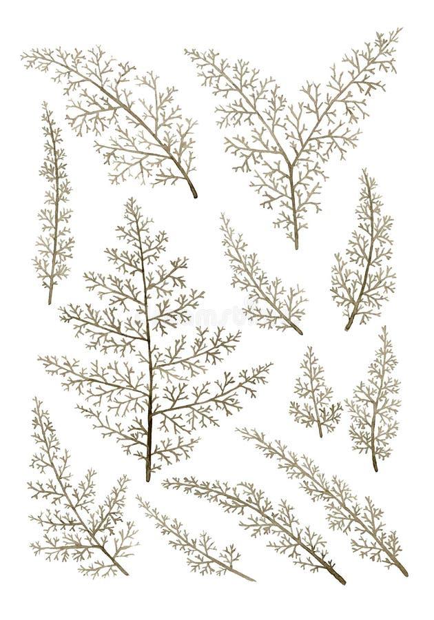 Uppsättning av isolerat dekorativt ris royaltyfri illustrationer