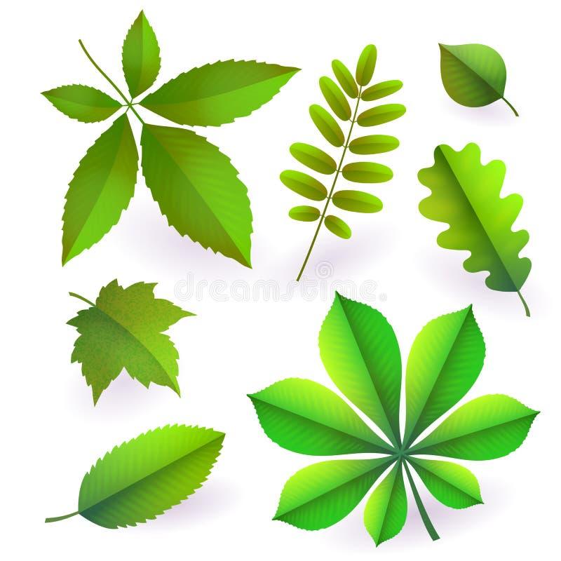 Uppsättning av isolerat ljust - grön sommar isolerade sidor Beståndsdelar av träd vektor stock illustrationer
