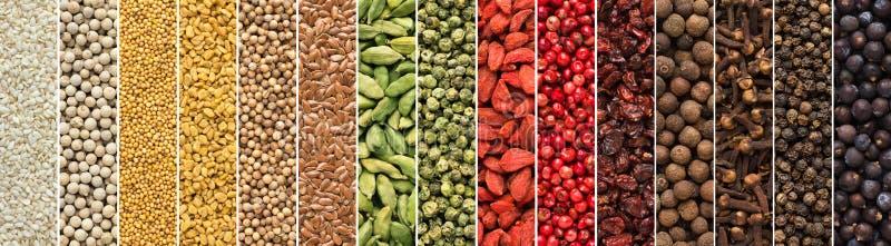 Uppsättning av kryddor och örter för indisk kokkonst färgrik smaktillsatsbakgrund för att förpacka för designmat arkivbild