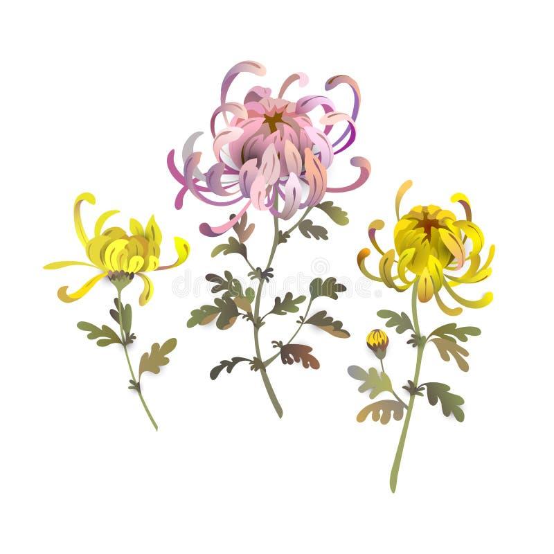 Uppsättning av krysantemumblommor Designbeståndsdelar för blom- bukett Gul och rosa krysantemumillustration stock illustrationer