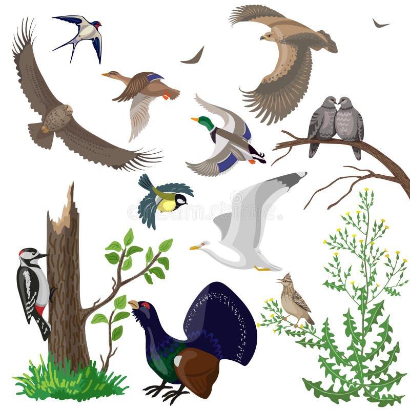 Uppsättning av lösa fåglar vektor illustrationer
