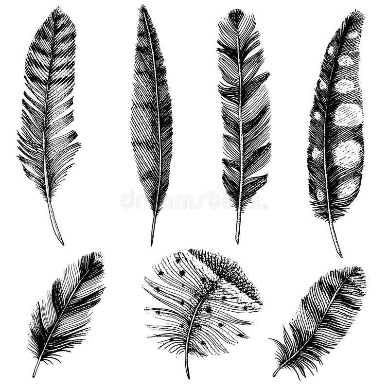 Uppsättning av lantliga realistiska fjädrar av olika fåglar, ugglor, påfåglar, änder den inristade handen som dras i gammal tappn royaltyfri illustrationer