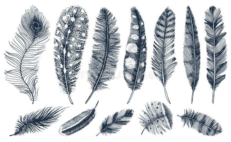 Uppsättning av lantliga realistiska fjädrar av olika fåglar, ugglor, påfåglar, änder den inristade handen som dras i gammal tappn stock illustrationer