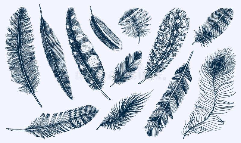 Uppsättning av lantliga realistiska fjädrar av olika fåglar, ugglor, påfåglar, änder den inristade handen som dras i gammal tappn vektor illustrationer