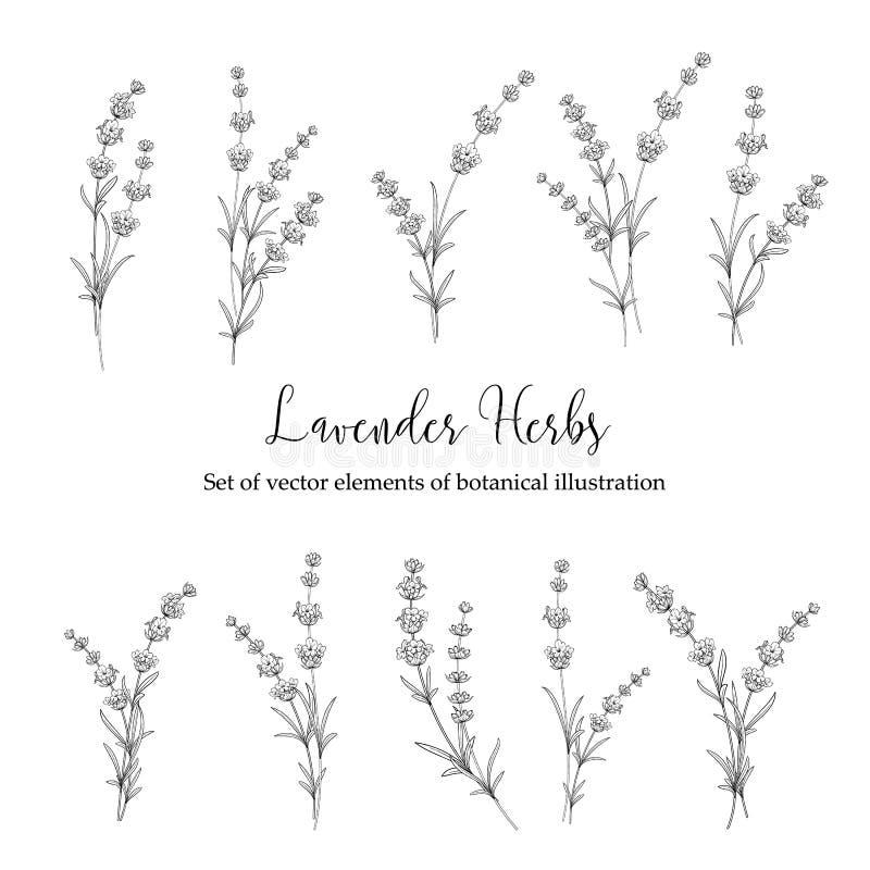 Uppsättning av lavendelblommor stock illustrationer