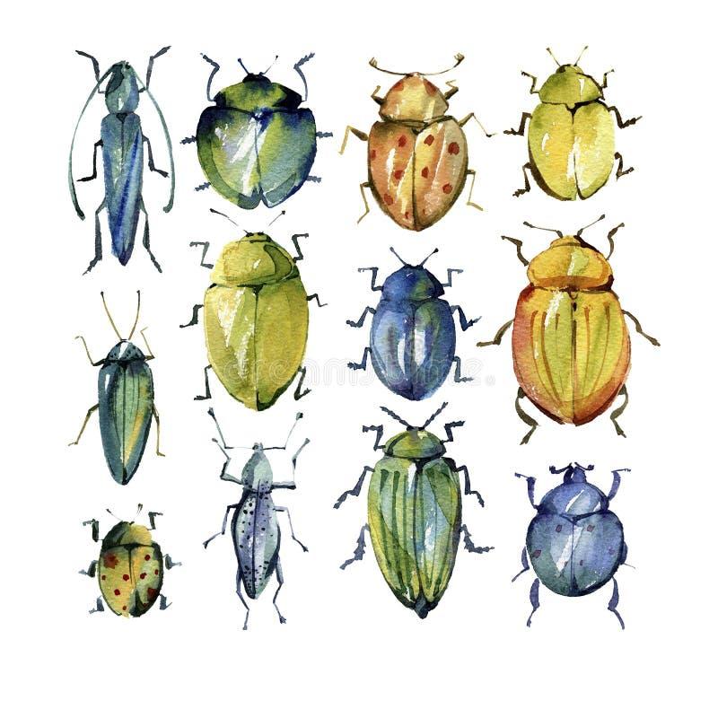 Uppsättning av ljusa skalbaggar för vattenfärg stock illustrationer