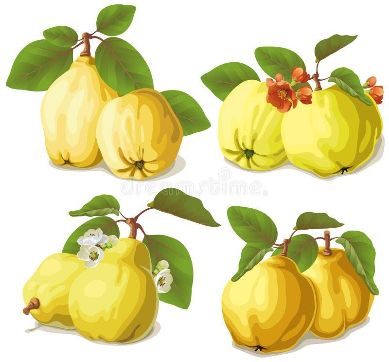 Uppsättning av mogna quinces stock illustrationer