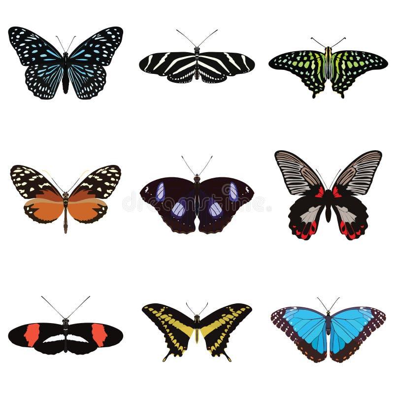 Uppsättning av nio exotiska fjärilar royaltyfri illustrationer