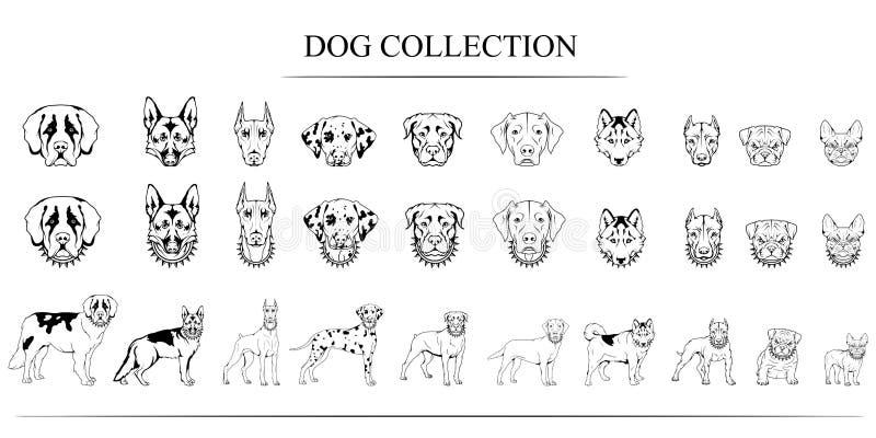 Uppsättning av olika avel av hundkapplöpning stock illustrationer