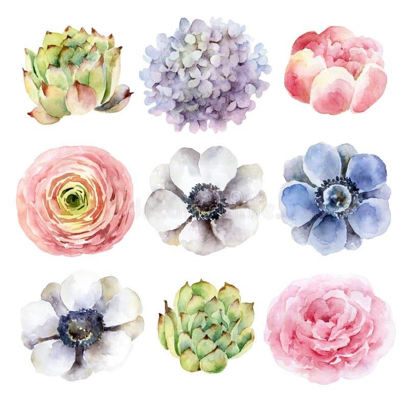 Uppsättning av olika blommor på vit bakgrund royaltyfri illustrationer