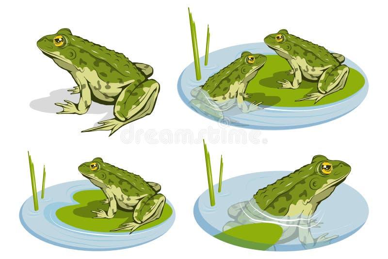 Uppsättning av olika grodor Vektorgrodalogo Grodan skissar vektor illustrationer