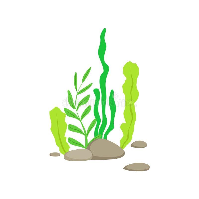 Uppsättning av olika nedersta undervattens- alger som växer på vagga stock illustrationer