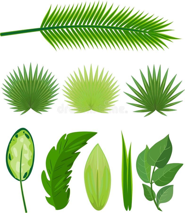 Uppsättning av olika stora gröna sidor av tropiska växter vektor illustrationer