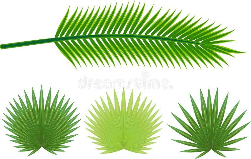 Uppsättning av olika stora gröna sidor av tropiska växter stock illustrationer