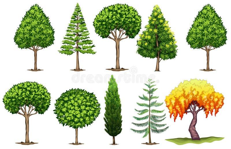 Uppsättning av olika typer av träd vektor illustrationer