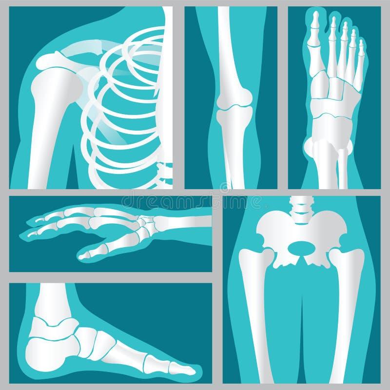 Uppsättning av röntgenstrålen av människan vektor illustrationer