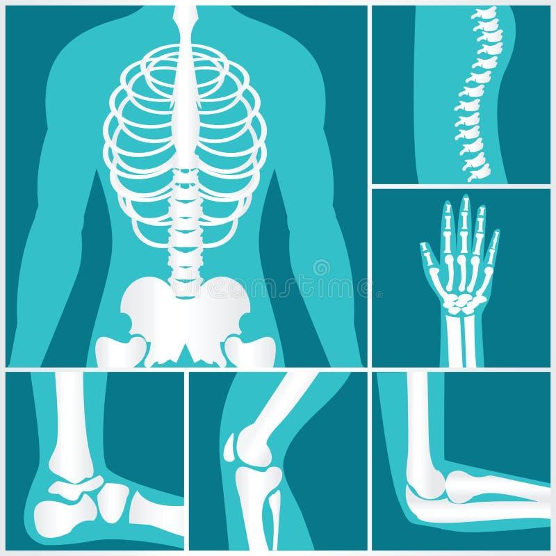Uppsättning av röntgenstrålen av mänskligt skelett- stock illustrationer