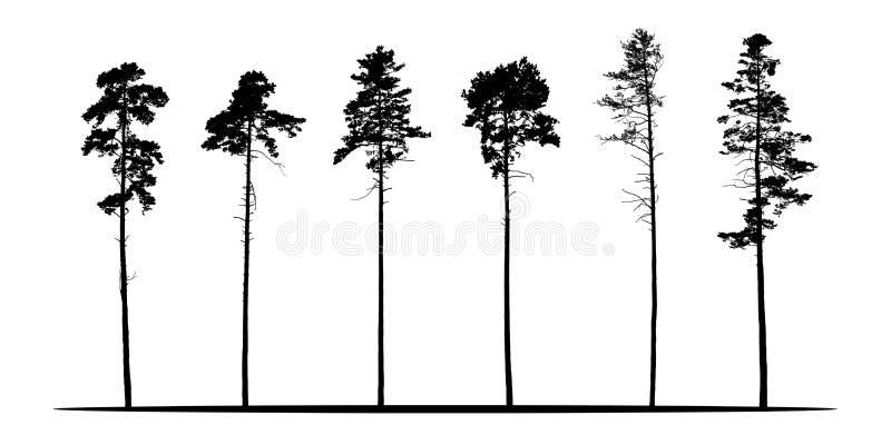 Uppsättning av realistiska vektorkonturer av barrträd - isolat royaltyfri illustrationer