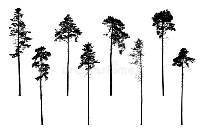 Uppsättning av realistiska vektorkonturer av barrträd - isolat vektor illustrationer