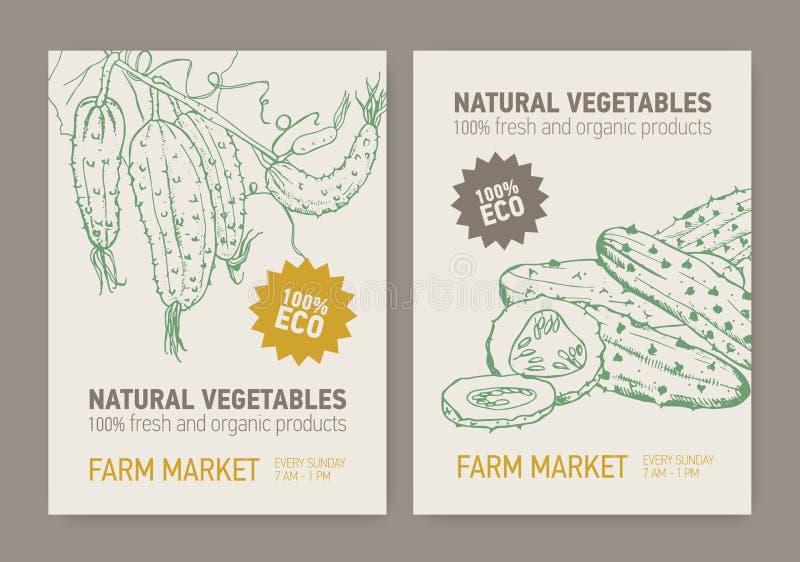 Uppsättning av reklamblad- eller affischmallar med gurkor som skivas och som är fullvuxna på vinranka Ny organisk grönsakhand som vektor illustrationer