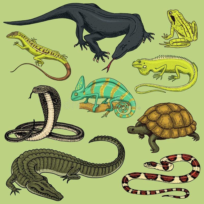 Uppsättning av reptilar och amfibier Lös krokodil, alligator och ormar, bildskärmödla, kameleont och sköldpadda Husdjur och vektor illustrationer