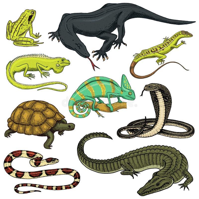 Uppsättning av reptilar och amfibier Lös krokodil, alligator och ormar, bildskärmödla, kameleont och sköldpadda Husdjur och stock illustrationer