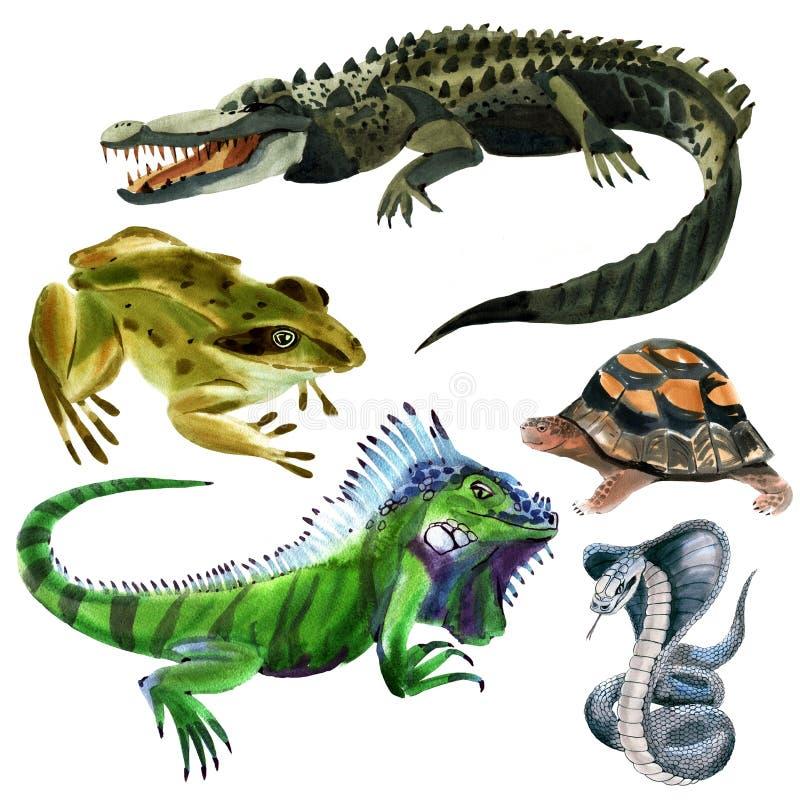 Uppsättning av reptildjur stock illustrationer