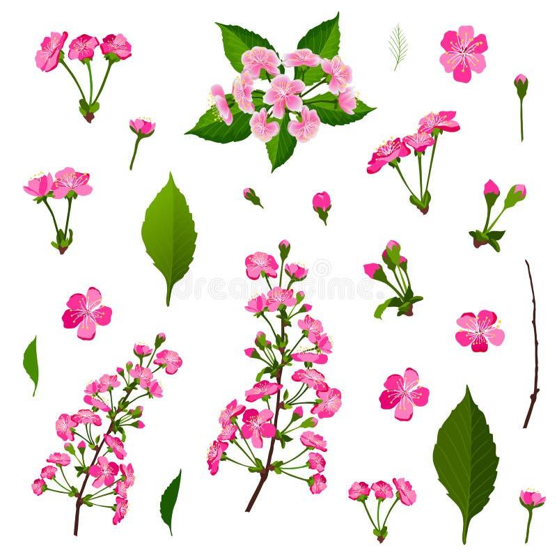 Uppsättning av rosa blommor för körsbärsrött träd royaltyfri illustrationer