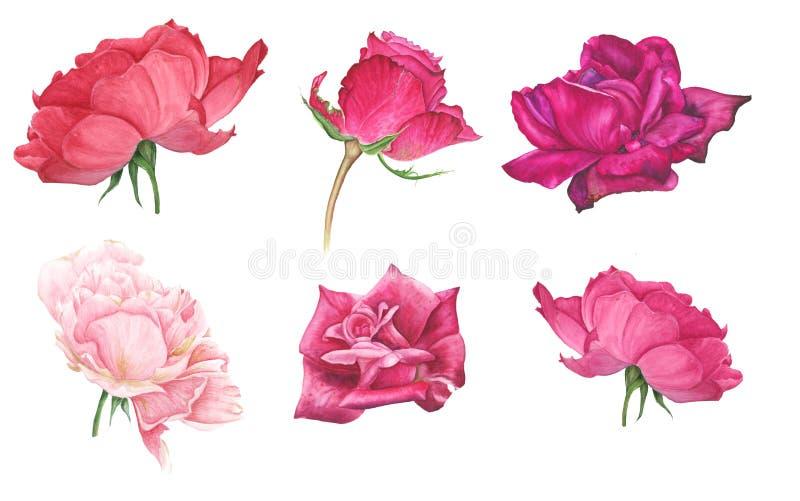 Uppsättning av rosa och röda rosor royaltyfri illustrationer